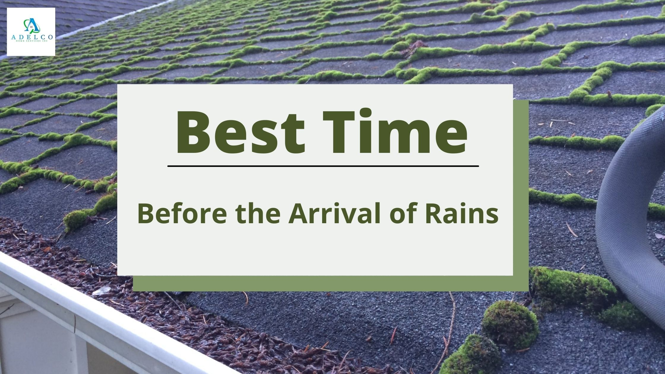 Best Time for Roof Moss Removal