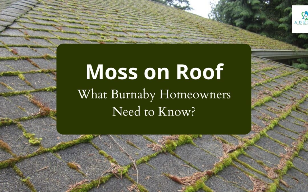 Moss on Roof – Things to Consider by Burnaby Homeowners