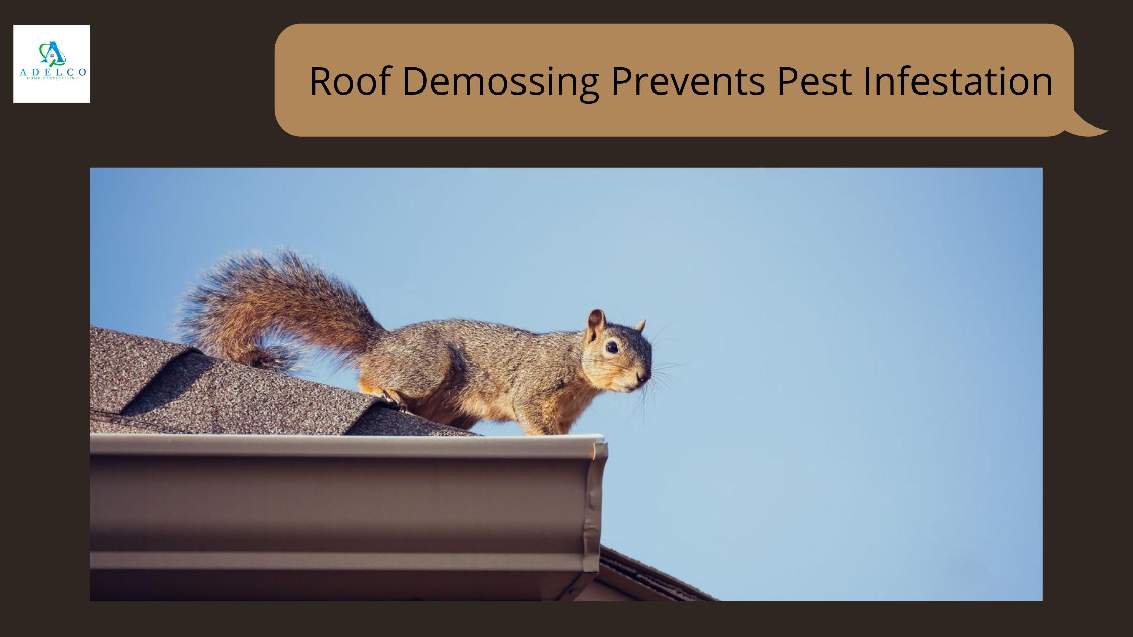 Roof Demossing Prevents Pest Infestation