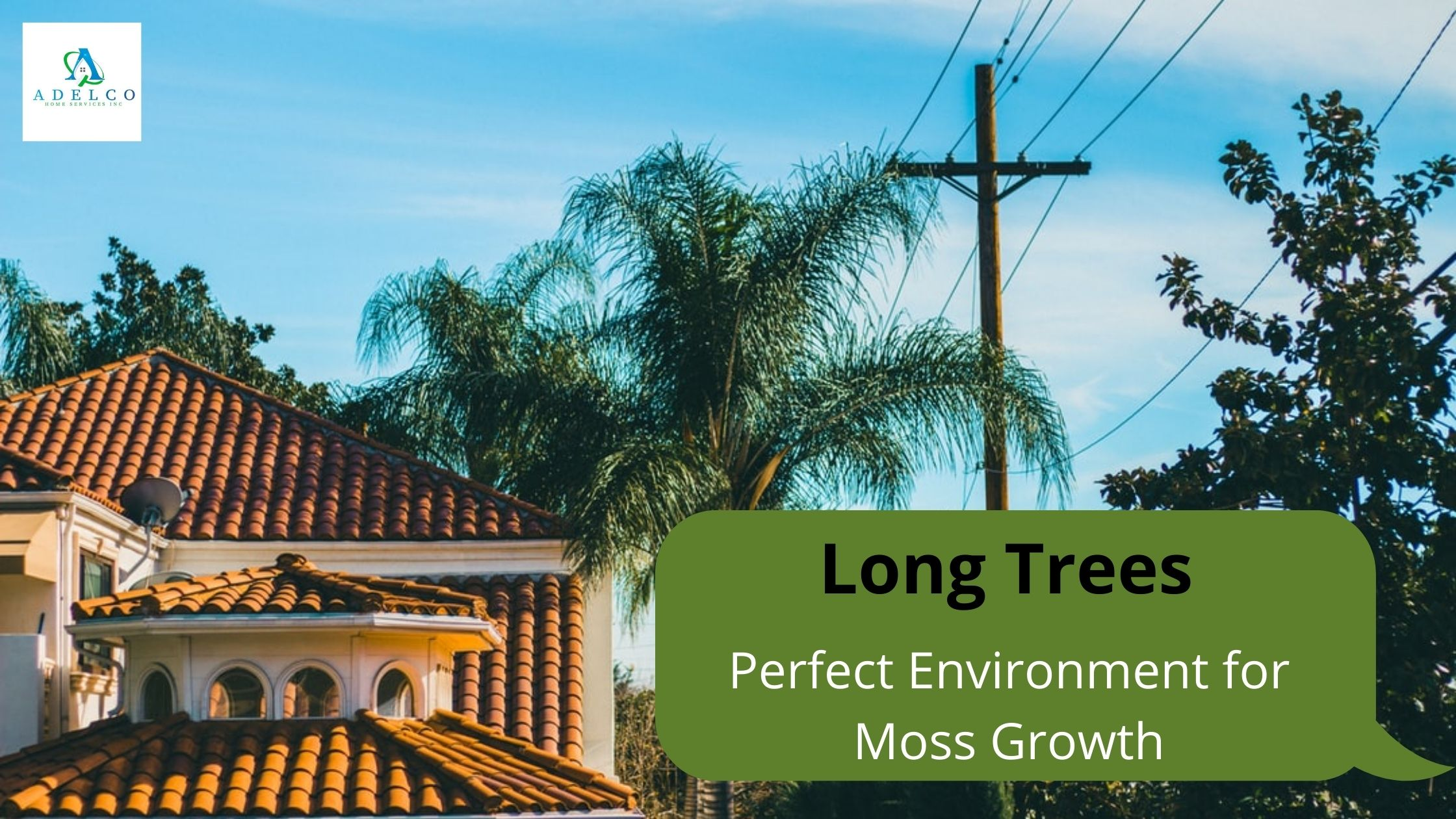 Long Trees - Perfect Wet Environment for Moss Growth